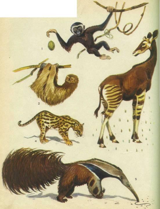 В Кунгурском районе подтверждением того, что лось добыт, служат зубы животного